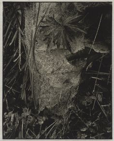 Cobweb in Rain, Georgetown, Maine, 1927