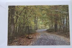 Walk in the Woods Photo Note Card  Woodland  Blank Note by manukai