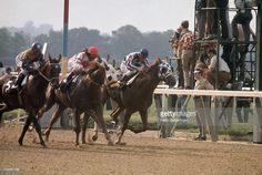 Ron Turcotte in action aboard Secretariat during race at Belmont Park. Elmont, NY Get premium, high resolution news photos at Getty Images All About Horses, Big Horses, Show Horses, Horse Story, Faster Horses, The Great Race, Triple Crown Winners, Beautiful Horses, Pretty Horses