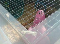 Bin Cages - DIY Hamster!