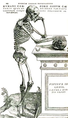 skelet mens - Google zoeken