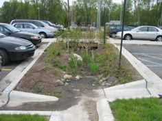 Have you considered putting in a rain garden?  Not sure what a rain garden is?  Check out this post for more info
