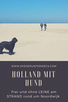 Am Strand ohne  Leine: Holland mit Hund. Rund um Noordwijk Urlaub mit Hund.