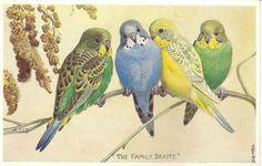 "Lot of 6 Parakeet Vintage Valentine's ""Lovebird"" Postcards | eBay"