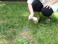 Did you know you could use beer to fix brown spots in your lawn? Get more unconventional uses for beer here >> http://www.diynetwork.com/made-and-remade/learn-it/5-handy-uses-for-beer-that-dont-involve-drinking?soc=pinterest