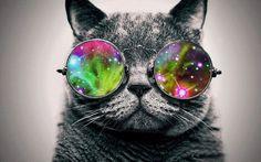 Eine coole Katze mit einer bunten Brille...♥♥♥