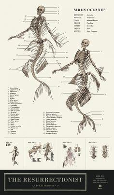 E.B. Hudspeth's Anatomically Correct Sketches of Mythical Creatures -from The Resurrectionist book, via DesignTAXI.com