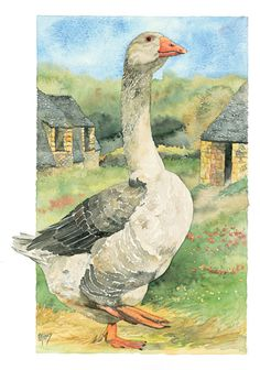 Woodland Animals, Farm Animals, Watercolor Bird, Watercolor Paintings, Art Canard, Goose Drawing, Art Et Nature, Duck Art, Amor Animal