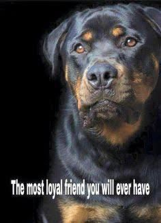 Image result for happy halloween rottweiler