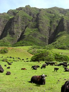 Kualoa Ranch, where some of the best memories of my life are made #Oahu #Hawaii #pinhawaii