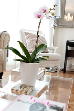 White orchid in bright living room