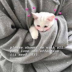 Cute Cat Memes, Cute Animal Memes, Cute Love Memes, Kittens Cutest, Cute Cats, Bb Chat, Baby Animals, Cute Animals, Love You Meme