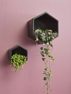 George & Co. Hexagon wall hung planter - black PRE ORDER FOR LATE NOVEMBER | exclusive to Collected