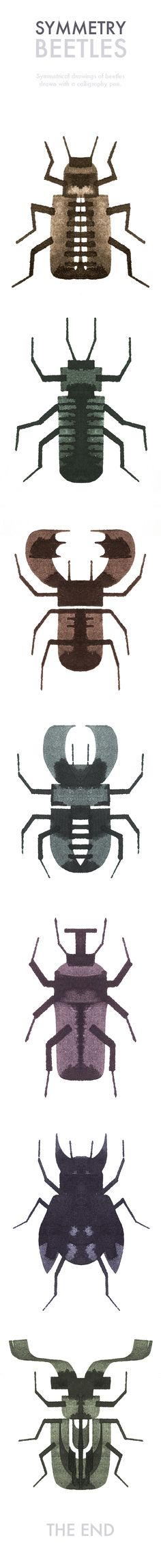 Symmetry Beetles — Symmetrical drawings of beetles drawn with a calligraphy pen — Andrew Fox