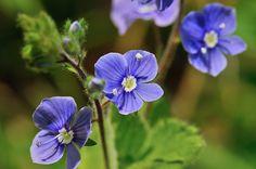 Fleur d\'été au jardin : liste des plus belles fleurs et conseils d ...