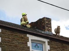 Wales - Where else could a sheep get stranded on a roof?