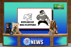 BFTB NETWoof News' Top Story for the week concerns #dog flipping. Keep you family pet safe! We also share sports and weather. #GoodNews