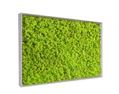 Create a Green Wall with MossFrame from Benetti Stone Decoration Plante, Free Plants, Types Of Plants, White Wood, Plant Decor, Scandinavian, Stone, Create, Garden