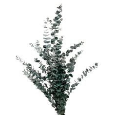 Ashland® Eucalyptus Bunch, 4 oz.