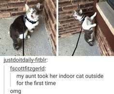 How about a whole huge bunch 'o' cat memes pets кошки, юмор, Funny Cat Memes, Tumblr Funny, Funny Posts, Hilarious, Funny Fails, Lol, Cute Funny Animals, Funny Cute Kittens, Animal Memes