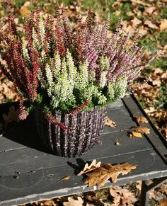 deco Erika heather autumn colors Flowerpot