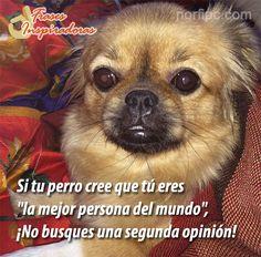 """Si tu perro cree que tú eres """"la mejor persona del mundo"""", ¡no busques una segunda opinión! #FrasesInspiradoras"""
