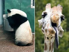 Animals That Had a Little Too Much To Drink Last Night