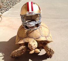 But turtles already HAVE helmets on, Colin Kaepernick!