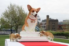 Guinness Book of Records: world's largest dog-friendly cake created for the royal wedding