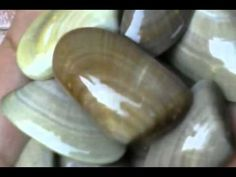 Atunara marinera, nuestro tercer videoclip que subimos al Youtube a primeros de diciembre del 2012