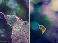 Alex Greenshpun Photography