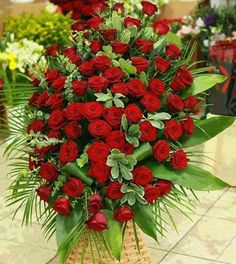 A Garden Of Beautiful Flowers Outdoor Plants, Exotic Flowers, Rose Bouquet, Ikebana, Beautiful Roses, Red Roses, Planting Flowers, Flower Arrangements, Christmas Wreaths
