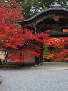 神社。  僕は、神社がスキ。 神社は、結婚、寺は、葬式、って感じがするし、清しく、厳格な雰囲気や、折り目正しさが、おれに、合ってると感じ、居心地がいい。 僕にとって、美しい、って、こういうコト。