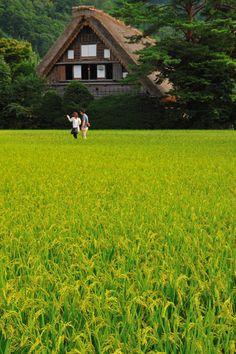 Shirakawa village, Gifu, Japan - the World Heritage