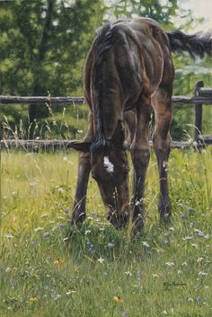 Kim Penner -The Daisy Cropper. Adorable little foal grazing in the tall grass. Paintings I Love, Animal Paintings, Horse Paintings, Pastel Paintings, Canadian Wildlife, Canadian Art, Arte Equina, Horse Artwork, Horse Drawings