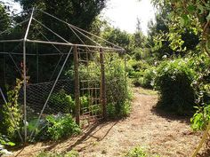 Old tent frame for seedlings chicken-proofed with chicken wire by hardworkinghippy, via Flickr