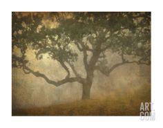 Oak in Fog Study 13 Giclee Print-Master BR