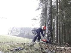 Die Bäume haben es in diesem Winter auch nun wirklich nicht leicht gehabt. Um den Bestand zu pflegen hat es Tobias mit Schnittschutzhose, Helm und Motorsäge in den Wald verschlagen.