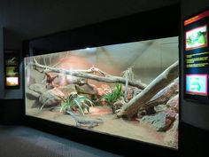 Feeding Your Bearded Dragon In The Right Way Lizard Terrarium, Bearded Dragon Terrarium, Lizard Habitat, Reptile Habitat, Reptile House, Reptile Room, Savanna Monitor, Terrariums, Snake Cages