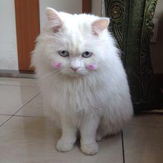 A cute cat ㅋㅋㅋ
