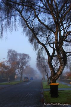 Fog blanketed Invercargill recently, making this tree and wheelie bin on Melbourne Street look almost magical. Melbourne Street, New Zealand South Island, Street Look, Nice Things, Scenery, June, Country Roads, Australia, Places