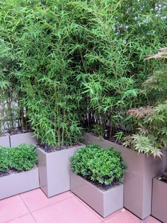 Bamboo container - I wish it was spring already! This is the only way to have bamboo in your yard. Take it from Dan and I, be sure to keep it contained.