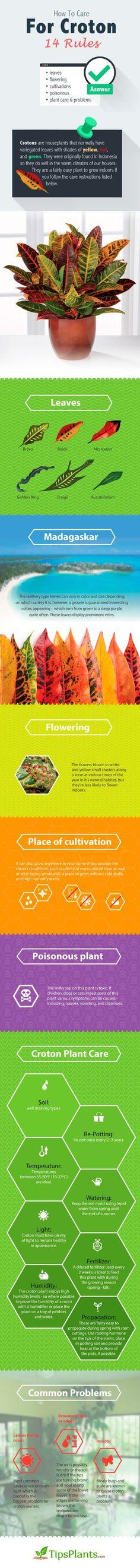 Croton infographic