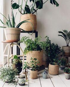 Es müssen nicht immer Orchideen sein! Wir haben für euch die richtige Zimmerpflanze für jeden Raum - und die sind nicht nur schön...