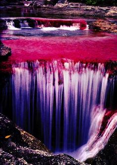 """Caño Cristales is also known as """"the river of five colors,"""" and it's considered to be the most beautiful river in the world. During Colombia's wet season, the water flows fast and deep, obscuring the bottom of the river and. All Nature, Amazing Nature, Science Nature, Pink Nature, Nature Water, Places Around The World, The Places Youll Go, Places To See, What A Wonderful World"""