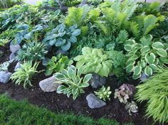 Hostas forum: My favorite Hosta bed....... (National Gardening ...
