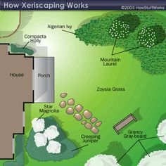 """HowStuffWorks """"Principles of Xeriscaping"""" - Great article on how to plan out your space for optimal xeriscaping."""
