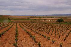 Cariñena: El vino de las piedras