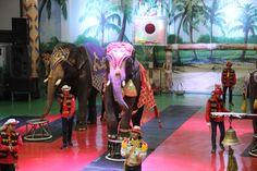 점보빌리지  코끼리공연 http://www.eleland.com/