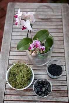 Make your own orchid terrarium {an indoor garden}